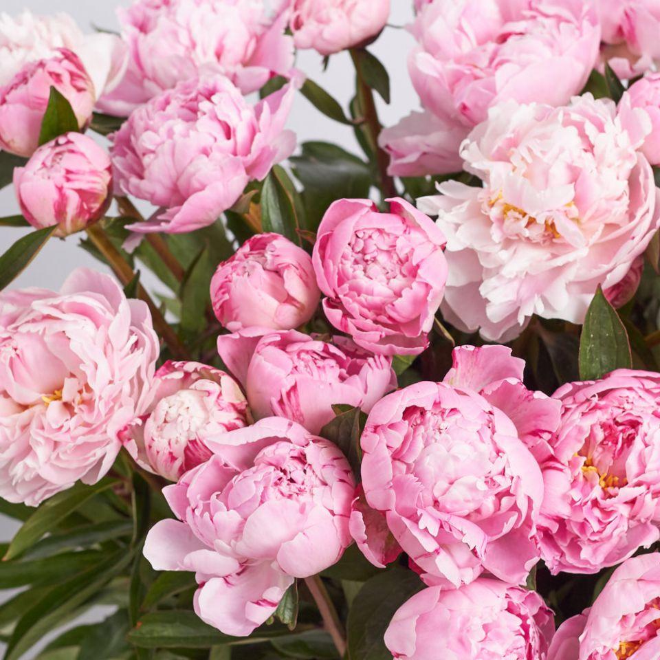"""Голландский пион """"Розовый"""""""