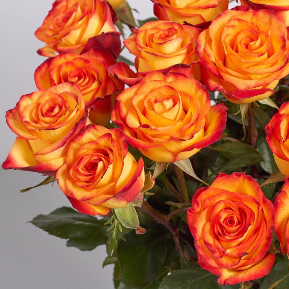 """Голландская роза """"Кабарет"""""""